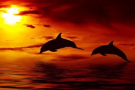 resort-girls-dolphins